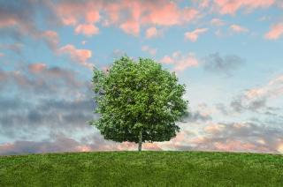 Tree Planting Program